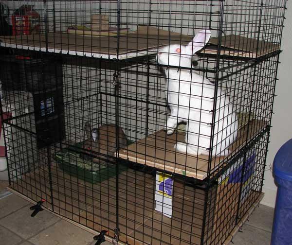 Easy Diy Indoor Rabbit Hutch